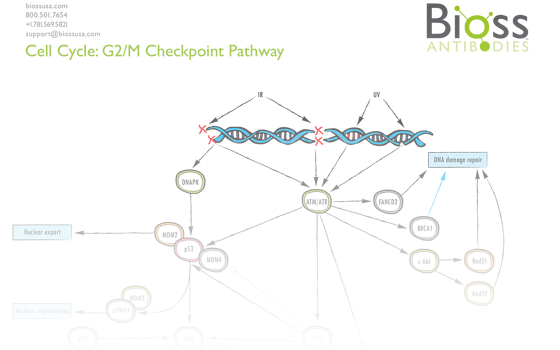 g2m_pathway.png